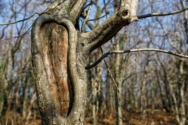 Boomstam van boom met gat, in het park