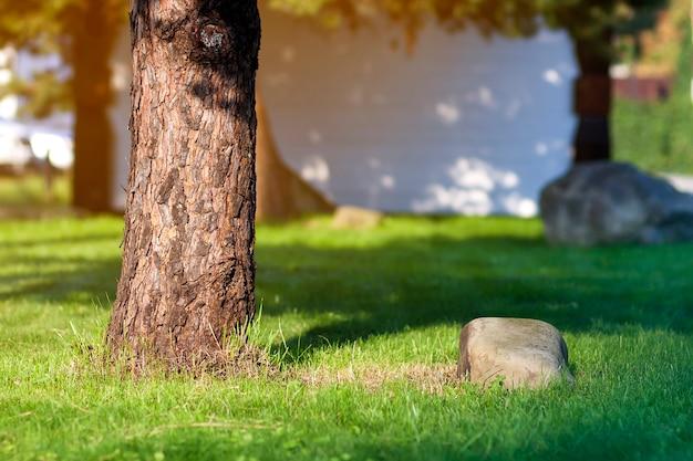 Boomstam van een boom en grote steen op groene graslening.