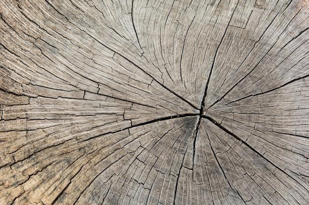 Boomstronk, dwarsdoorsnede van een boomstam