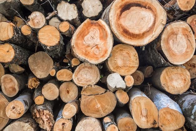 Boomstronken. brandhout gestapeld en voorbereid op de winter.
