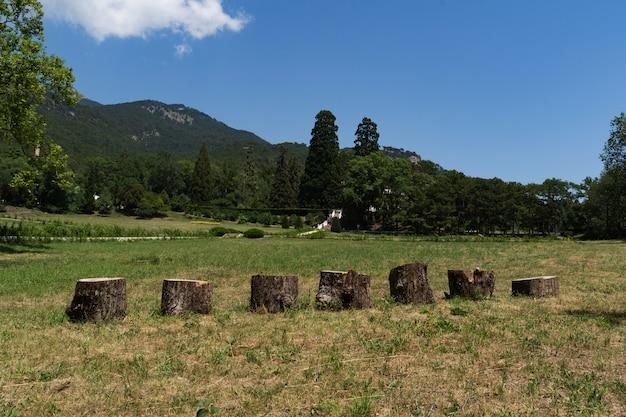 Boomstronken op de achtergrond van groene bergen. een prachtige screensaver.
