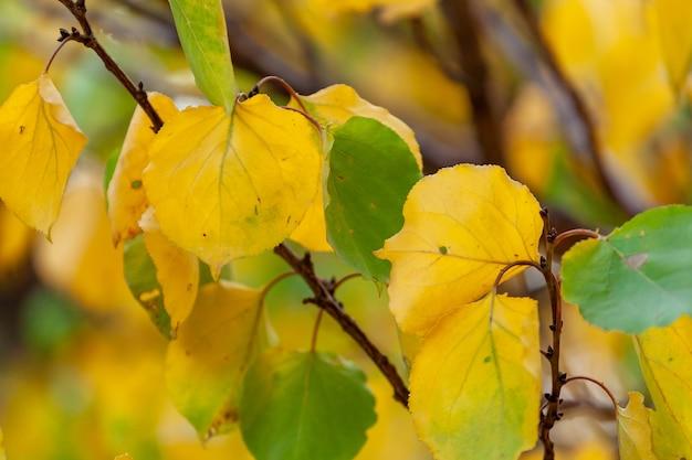 Boomtak met herfstbladeren