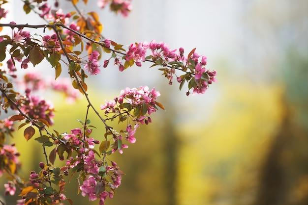 Boomtak met kleine roze bloemen