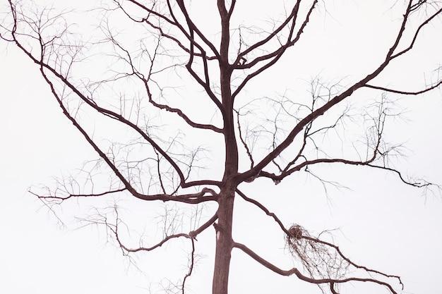 Boomtak op blauwe winter sky. boom en takken van de boom. uit lijn van droge boomtak tegen een blauwe achtergrond van de herfsthemel.