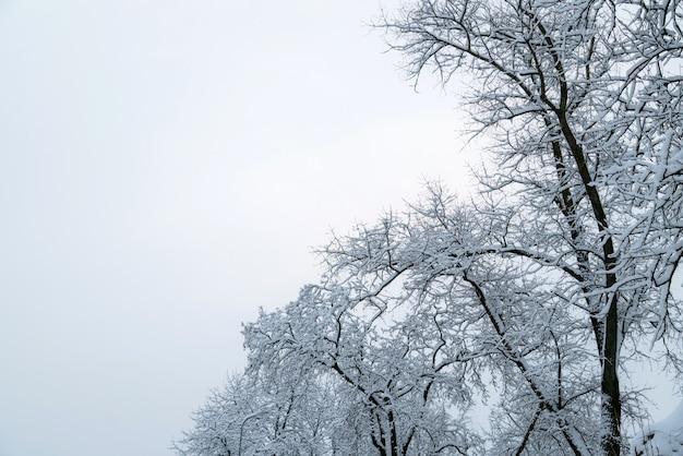 Boomtakken bedekt met sneeuw en lucht. winter achtergrond met kopie ruimte voor tekst. Premium Foto