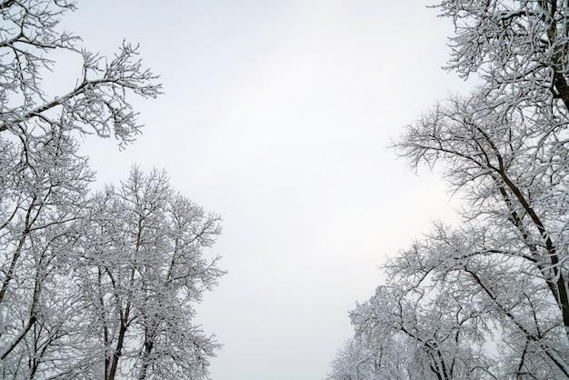 Boomtakken bedekt met sneeuw en lucht. winter achtergrond met kopie ruimte voor tekst.