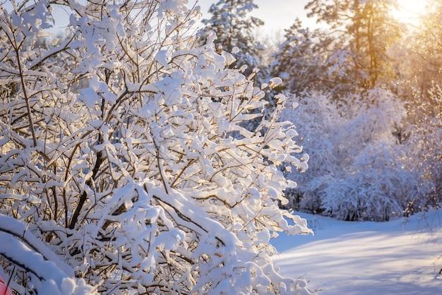 Boomtakken bedekt met sneeuw in het zonlicht