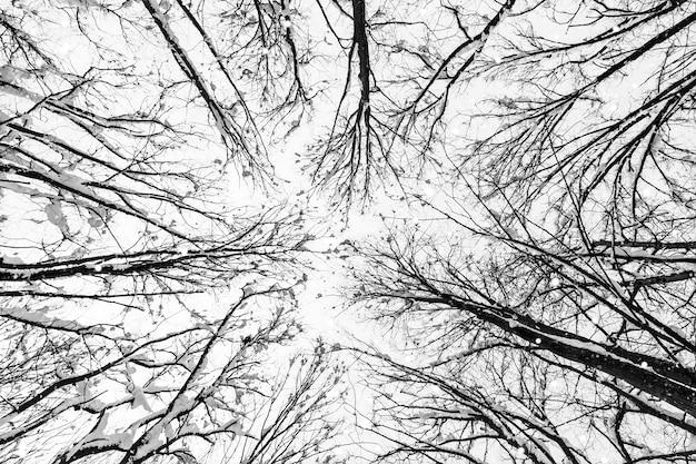 Boomtakken in het winterbos en vallende sneeuw onderaanzicht