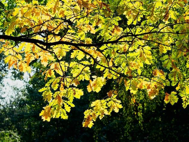 Boomtakken met herfstbladeren achtergrond