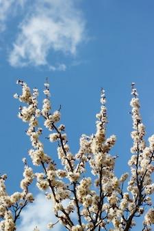 Boomtakken met lentebloesems op heldere blauwe hemelachtergrond verticaal.