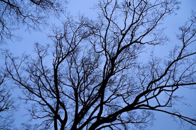 Boomtakken zonder bladeren tegen blauwe hemel.