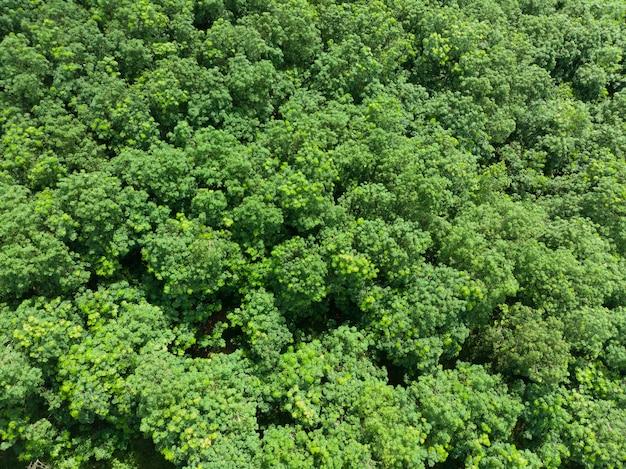 Boomtoppen op een tropische bosachtergrond tropical