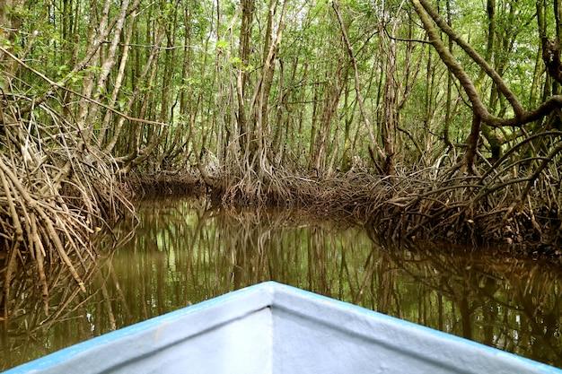 Boot tussen verbazingwekkende mangrovebossen