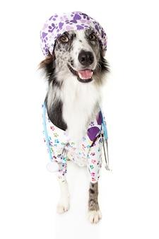 Border collie-hond verkleed als dierenarts die een stethoscoop en pet, ziekenhuisjurk en pet draagt.