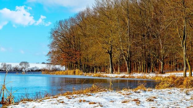 Bos aan de oever van de rivier bij zonnig weer