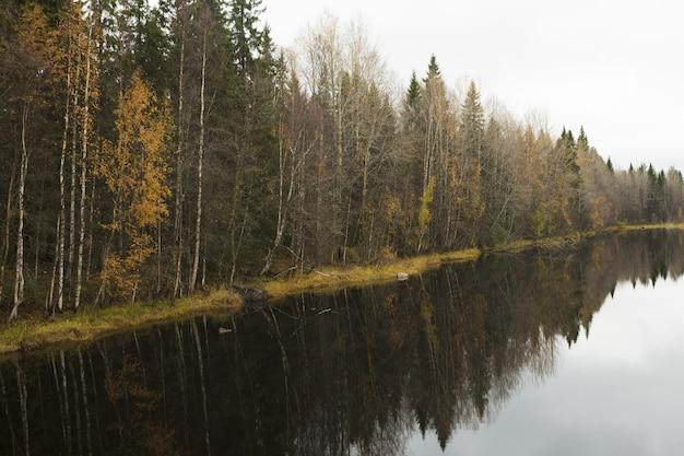 Bos aan het water
