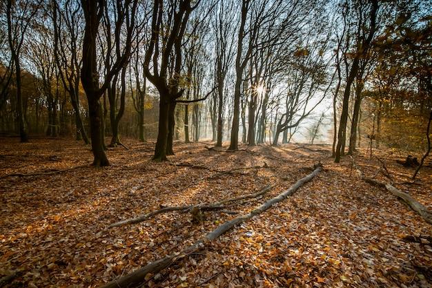 Bos bedekt met droge bladeren en bomen in het zonlicht tijdens de herfst