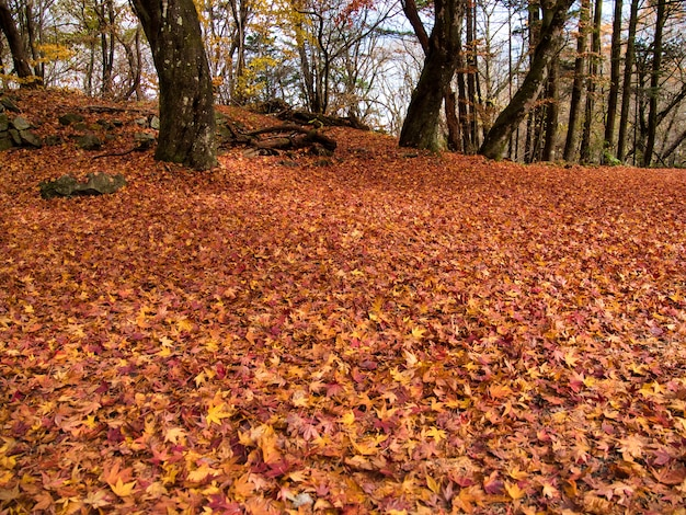 Bos bedekt met droge bladeren, omringd door bomen onder zonlicht tijdens de herfst