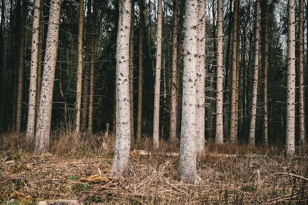Bos bedekt met gras en bomen tijdens de herfst