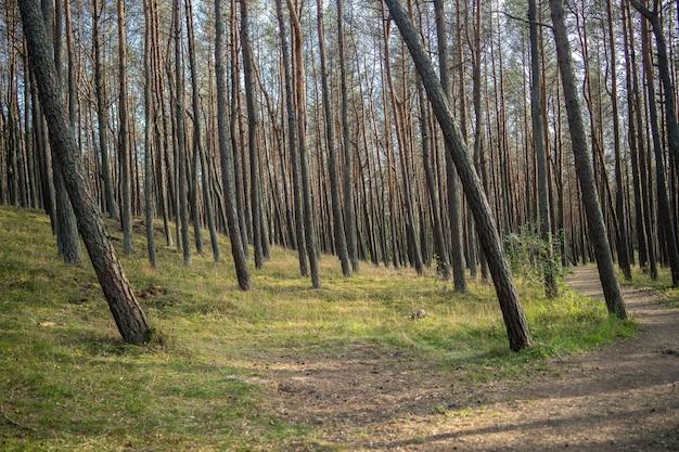 Bos bedekt met gras en hoge bomen in het zonlicht overdag