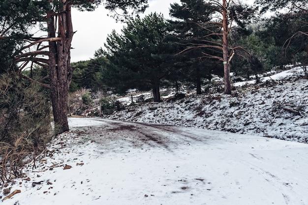 Bos bedekt met sneeuw overdag in de winter