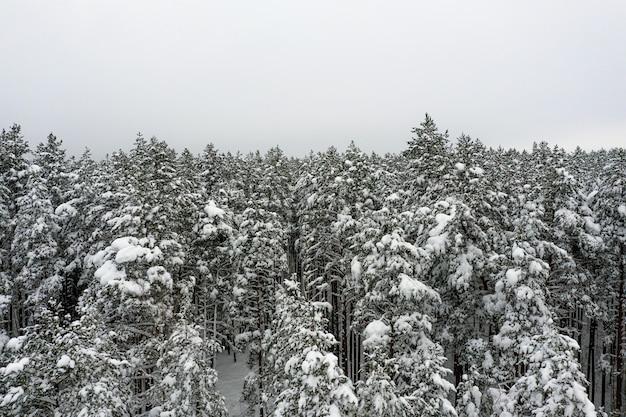 Bos bedekt met sneeuw van bovenaf, winterlandschap luchtfoto drone uitzicht