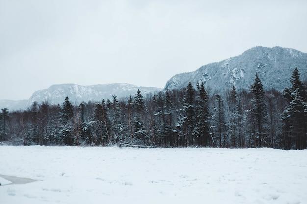 Bos bedekt met sneeuw