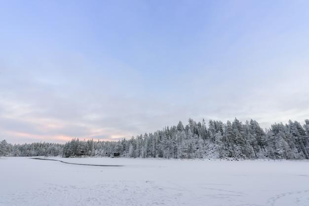 Bos bedekt met zware sneeuwval