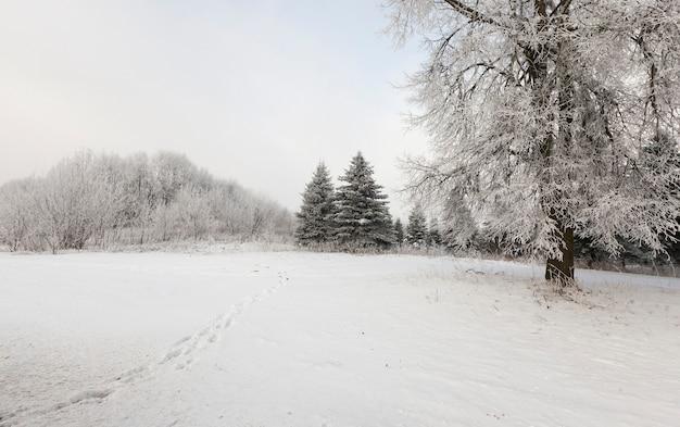 Bos bomen bedekt met sneeuw