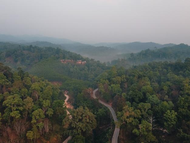 Bos, bomen en groene wegen op het platteland van de avond van bovenaf