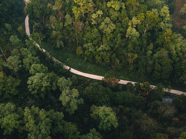 Bos, bomen en groene wegen op het platteland van de avond van bovenaf Premium Foto