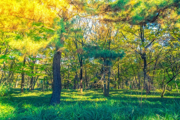 Bos bomen (gefilterde afbeelding verwerkt vintage effect.)