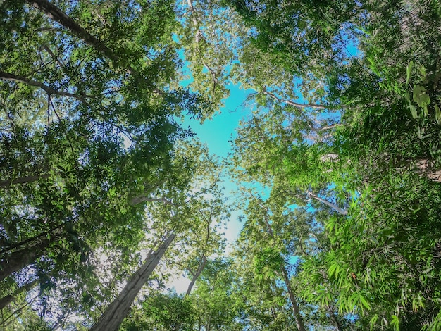 Bos bomen met zonlicht van de natuur