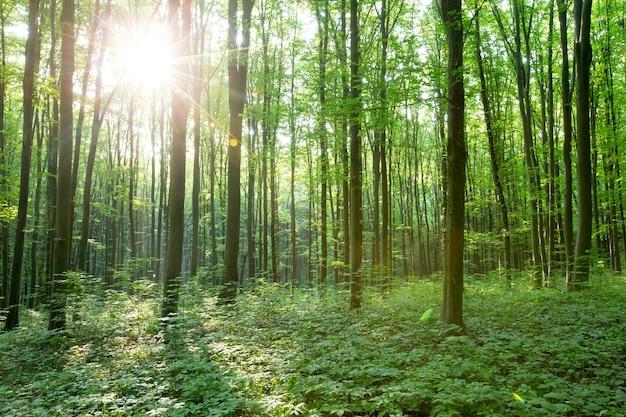 Bos bomen. natuur groen bos