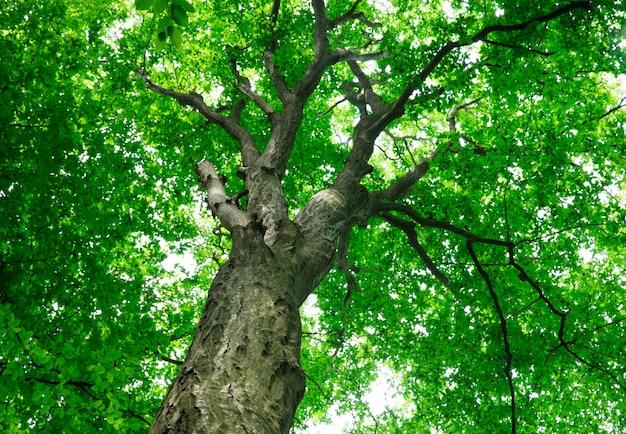 Bos bomen. natuur groen hout sunlights Premium Foto