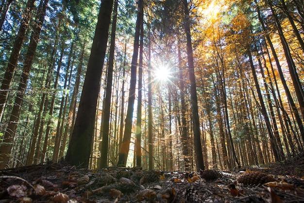 Bos bomen. natuur groen hout zonlicht achtergronden