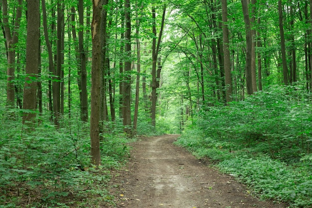 Bos bomen natuur groen hout zonlicht