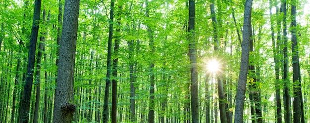 Bos bomen. natuur groen hout zonlicht