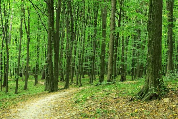 Bos bomen. natuur groen hout