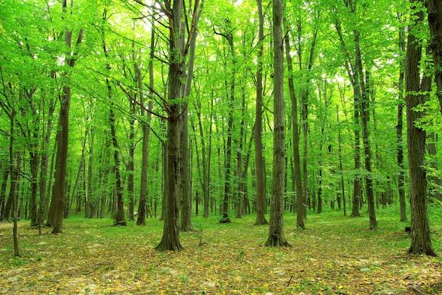 Bos bomen. natuur groene houten achtergronden
