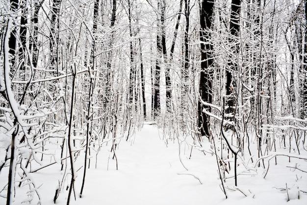 Bos bomen. natuur sneeuw hout achtergrond