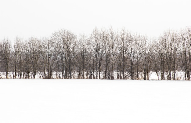 Bos dat door verse sneeuw tijdens de wintertijd wordt behandeld. winters tafereel is het contrast tussen de ijzige bomen
