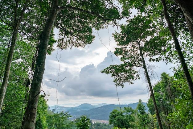 Bos de groeibomen, regenwoud van aard het groene bomen voor aardachtergrond