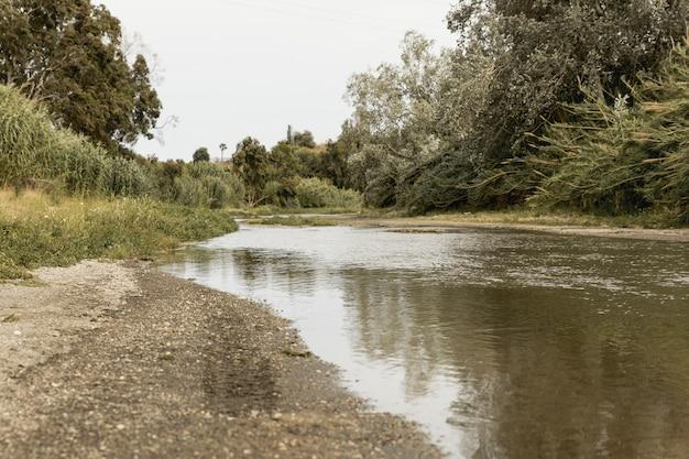Bos dichtbij een rivierlandschap