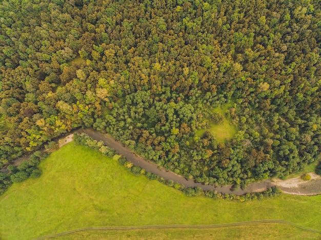 Bos en landweg