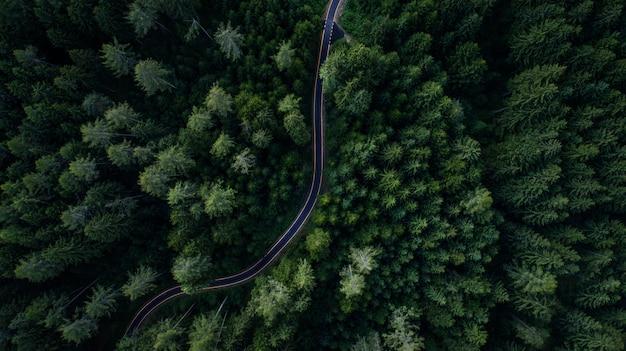 Bos en straat van bovenaf