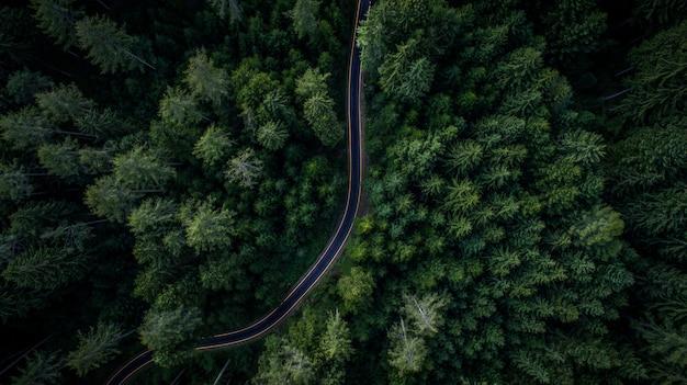Bos en weg van bovenaf
