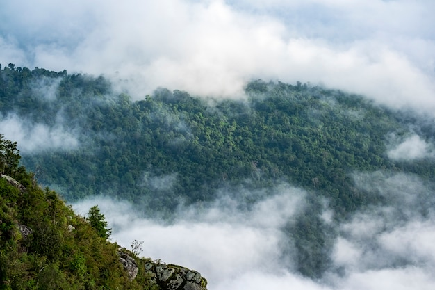 Bos en wolk op de top van de berg