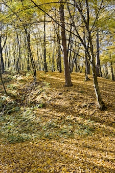Bos groeit op heuvelachtig terrein tijdens de herfsttijd van het jaar, verlicht door de zonnestralen in de vroege herfst en halverwege de herfst