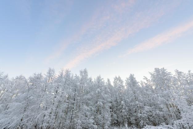 Bos heeft bedekt met zware sneeuw en heldere blauwe lucht